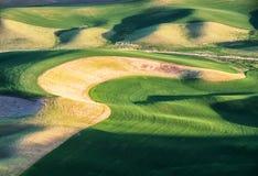 Les champs de blé contournent les collines de Palouse images libres de droits