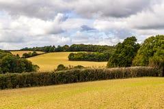 Les champs de ferme produisant leur hiver cultivent près de Crowhurst dans le Sussex est, Angleterre images libres de droits