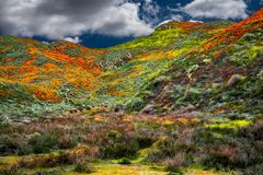 Les champs de pavot de Californie aménagent en parc pour faire une image parfaite du ressort photo stock