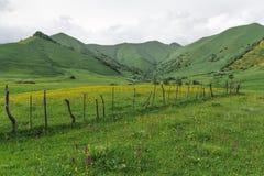 Les champs de vert Image stock