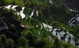 Les champs en terrasse dans Ziquejie Image libre de droits