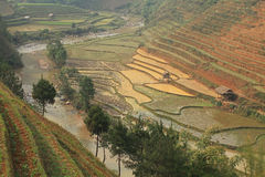 Les champs et les montagnes de terrasse Images stock