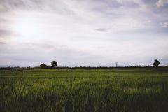 Les champs larges le soir images stock