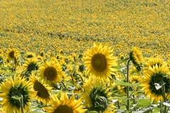 Les champs ruraux moyens de vacances d'été de l'Italie demandent les collines tendres Image stock