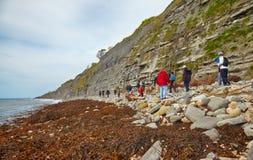 Les chasseurs de fossiles au littoral de la plage de Monmouth à la baie de Chippel Dorset occidental l'angleterre images libres de droits