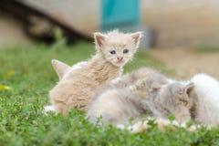 Les chatons Photos libres de droits