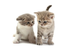 Les chatons photos stock