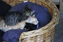 Les chatons dorment images stock