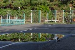 Les chatons jouent près des piscines images stock