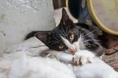 Les chatons jouent sur des oreillers de divan, qui est à l'arrière-plan Image libre de droits