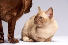 Les chatons regardent l'un l'autre photographie stock libre de droits