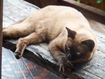 Les chats photographie stock libre de droits