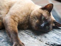 Les chats Photo stock