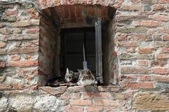 Les chats détendent dedans Photo libre de droits
