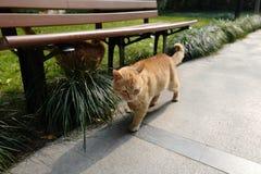 les chats de marche images libres de droits