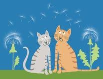 Les chats domestiques sur le pré d'été Photos libres de droits