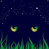 Les chats jaunissent des yeux et des étoiles pendant la nuit Image stock