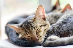 Les chats mignons dorment ensemble Images libres de droits
