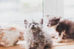 Les chats mignons est drôle Photo libre de droits