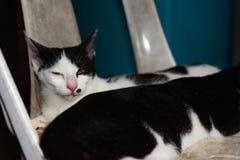 Les chats noirs et blancs dormant sur des chats de chaise se ferment, sélectif Photos stock