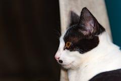Les chats noirs et blancs dormant sur des chats de chaise se ferment, sélectif Photographie stock
