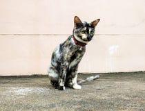Les chats noirs se reposent sur le plancher photographie stock libre de droits