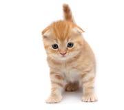 les chats plient des écossais images stock