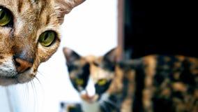 Les chats se ferment jusqu'à l'appareil-photo photographie stock libre de droits