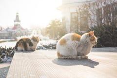 Les chats se reposent au soleil chaud Image libre de droits