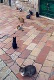 Les chats se reposent sur la rue dans la ville de Kotor sur la rue Photographie stock libre de droits