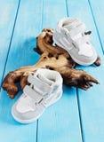Les chaussures extérieures des enfants Photographie stock libre de droits