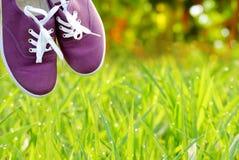 Les chaussures pourpres au-dessus de l'herbe verte de nature pendant le matin allument le fond Images stock