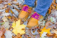 Les chaussures rouges sur des feuilles d'automne dans l'érable part Images libres de droits