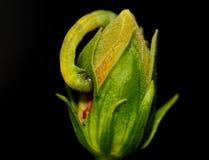Les chenilles mangent des fleurs Images libres de droits