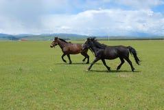Les chevaux Photo libre de droits
