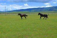Les chevaux Image libre de droits