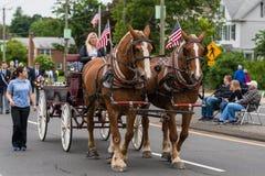Les chevaux de Brown Clydesdale tirent le chariot au défilé aux Etats-Unis photo stock