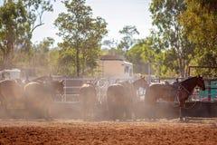 Les chevaux de rod?o ont attach? ? une barri?re Amidst Dust photo libre de droits