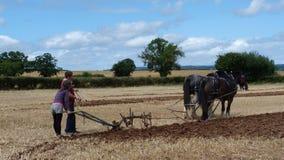 Les chevaux de Shire avec la charrue à un pays de jour ouvrable montrent dans Angleterre Photographie stock