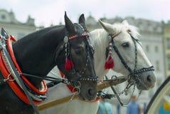 Les chevaux du taxi Photos stock