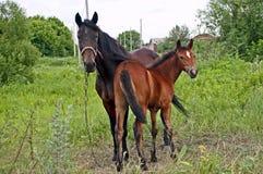Les chevaux enfantent et enfant Image stock