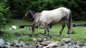 Les chevaux frôlent près d'une rivière de montagne clips vidéos