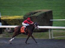Les chevaux numéro 7 chemins à travers le finishline Images libres de droits