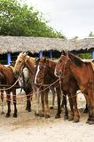 Les chevaux ont recueilli à la plage Photographie stock libre de droits