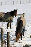 Les chevaux portent leurs manteaux images libres de droits