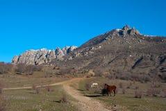 Les chevaux rouges et blancs s'approchent d'une route de campagne Photo stock