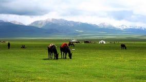 Les chevaux s'approchent du lac flower image libre de droits