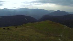 Les chevaux sauvages frôlent dans les montagnes clips vidéos