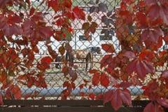 Les chevaux se tiennent près des barrières dans l'arène images libres de droits