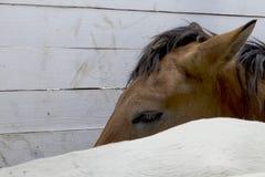 Les chevaux sont dans le stylo Chevaux dans un espace clôturé image stock